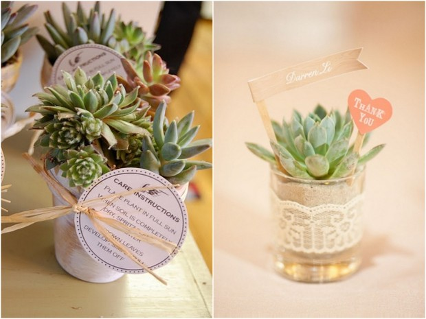 Wedding Trend: 7 Ways to use Succulent Plants in your Decor ...