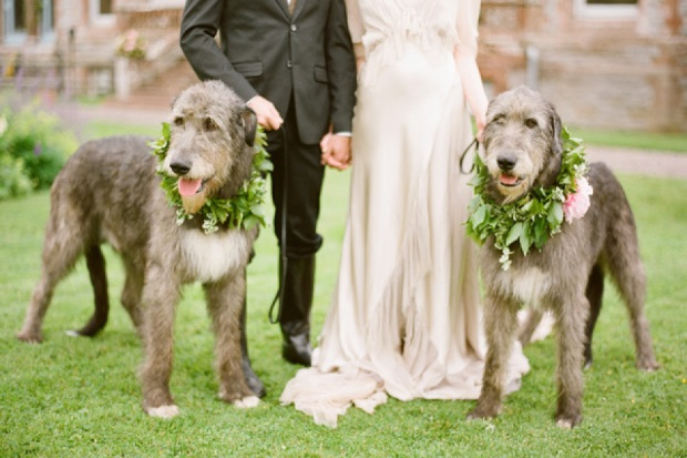 Irish wolfhound wedding venue