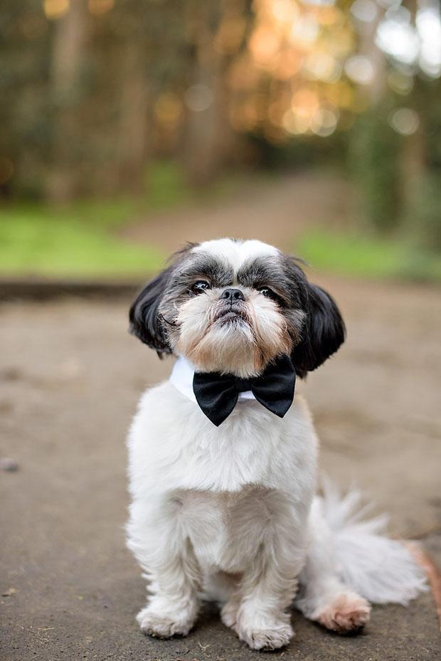10 adorable pets at weddings weddingsonline
