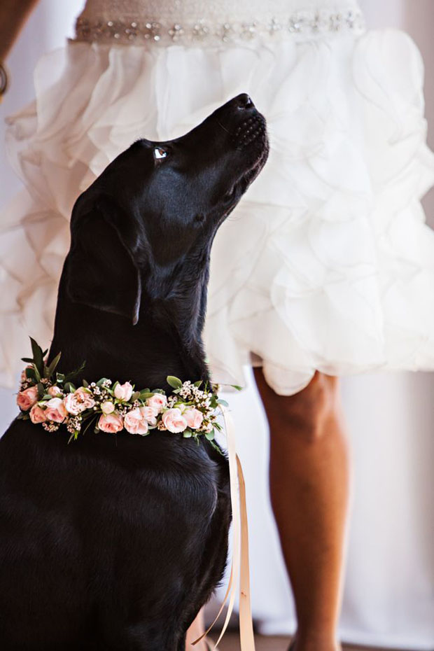 10 adorable pets at weddings weddingsonline