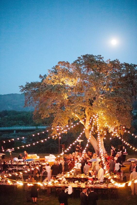 outdoor-forest-wedding-tree-lighting-strips