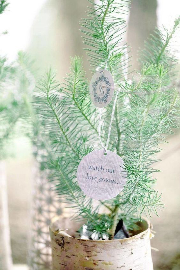 christmas-wedding-ideas-pine-tree-wedding-favours-watch-our-love-grow