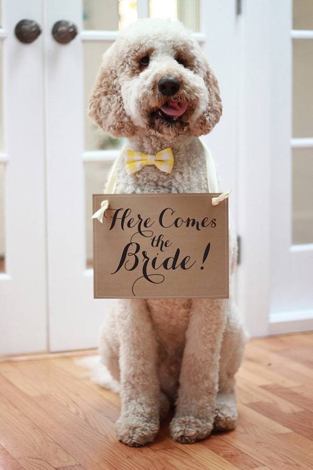 22 of the most adorable dogs at weddings weddingsonline