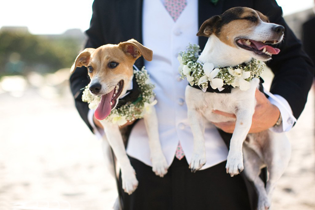 Years Ago You Might Have Got A Few Odd Looks If Had Your Precious Pooch Walk Rings Up The Aisle But We Re Glad To Say That S Thing Of