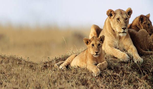 National Park in Kenya