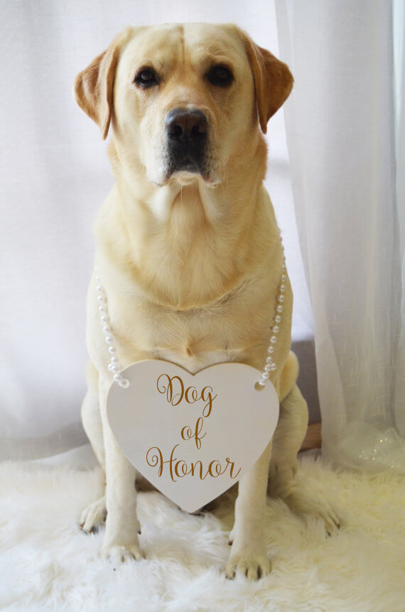dog-of-honor-pets-at-weddings-etsy