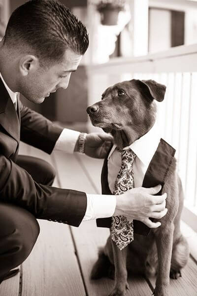 dressing-dog-clothes-wedding-suit
