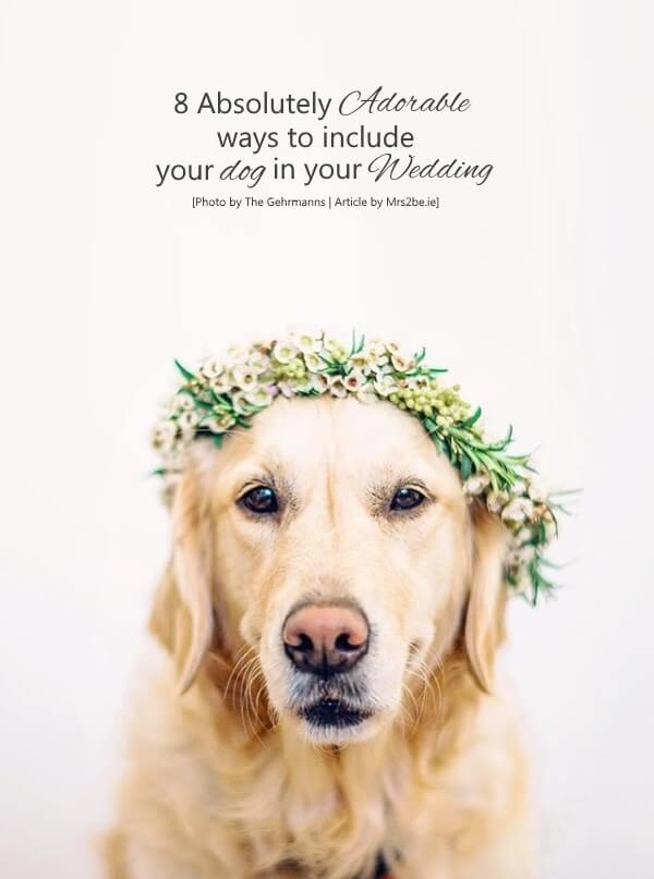 wedding-dog-flower-crown-boho-labrador-main2